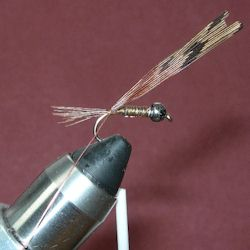 Pheasant Tail (Hare) ready to wind the fibers forward...